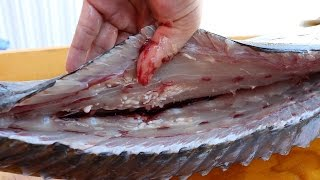 Download WORMS in an Amberjack?!?! Video