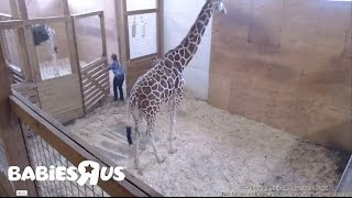 Download Update 04 20 17 Animal Adventure Park , Alyssa cleaning general cage Video