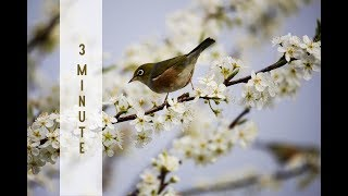 Download Reiki Healing Music with 24 x 3 minute Tibetan Bell Timer - 1 hour and 12 minutes Video