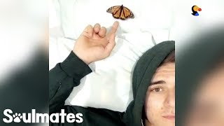 Download Guy Becomes Best Friends With A Butterfly | The Dodo Soulmates Video