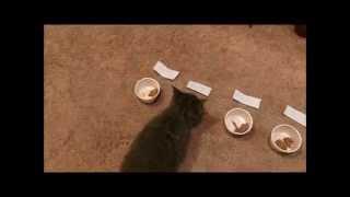Download Kitten Names Himself Video