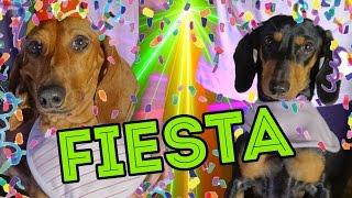 Download CUMPLI 4 AÑITOS!! | LOS POLINESIOS VLOGS Video