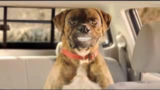 Download Toyota SA Hilux 'Buddy Sheep' Video
