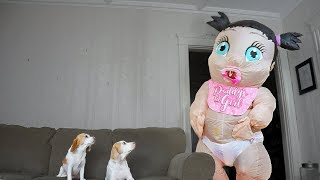 Download Funny Dogs vs. Giant Baby: Funny Dogs Maymo & Penny Video