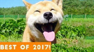 Download BEST ANIMALS OF 2017 | Funny Pet Videos Video