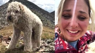 Download Owner Reunites With Her Dog After Goldendoodle Was Lost in Rocky Mountains Video