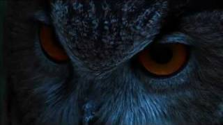 Download THE EAGLE OWL : THE LORD OF THE NIGHT Video