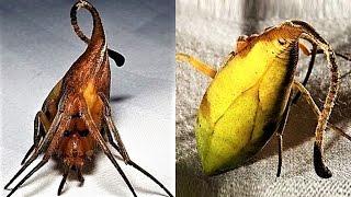 Download 9 NEW Weird Spider Species Video