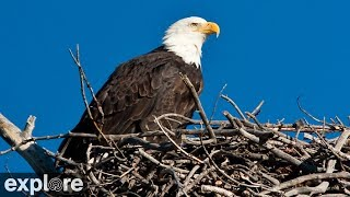 Download Sauces Bald Eagle - Channel Islands National Park Cams powered by EXPLORE.org Video
