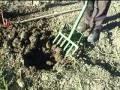 Download Vanga Forca scava patate salva schiena , ergonomica ,facile, ed altro Video