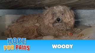 Download When the dog's owner died, he was left behind. Watch what happens next! Please share Video