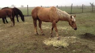 Download Horse Movie ″Buck″ - Stupid Woman Kills Horse for doing what she taught it - Rick Gore Horsemanship Video