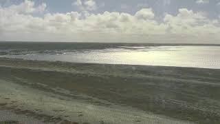Download Polar Bears Cape North - Wapusk National Park Cam 07-29-2018 14:39:22 - 15:39:23 Video