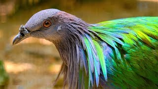 Download Most Beautiful Birds on Planet Earth Video