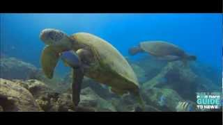 Download UNDER THE SEA HAWAII HD ″Waydes World Hawaii″ Video