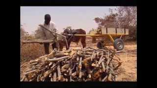 Download People & Trees - The Sahel Video