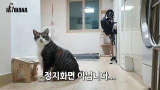 Download 집사가 집을 비운 사이 우리 고양이는? 고양이 분리불안 Video