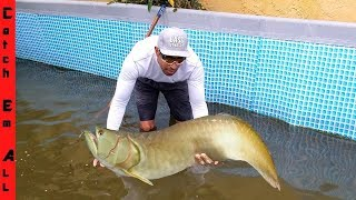 Download FOUND AROWANNA FISH while CLEANING in POOL! Video