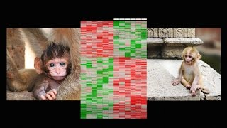 Download How early life experience is written into DNA | Moshe Szyf Video