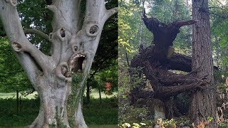 Download CREEPIEST Trees in the World Video