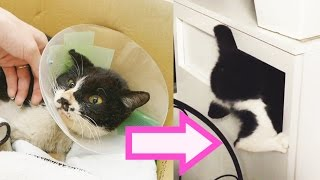 Download Rescuing the world's most annoying cat Video