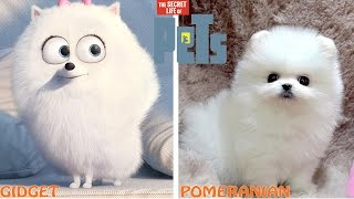 Download The Secret Life of Pets Characters in Real Life Video