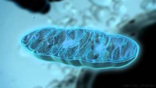 Download How Mitochondria Produce Energy Video
