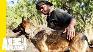 Download Pup on Patrol: How Anti-Poaching Dogs Aid in Conservation Video