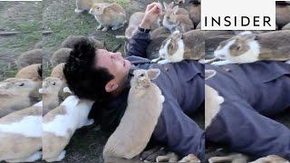 Download You can get buried by bunnies on this Japanese Island Video