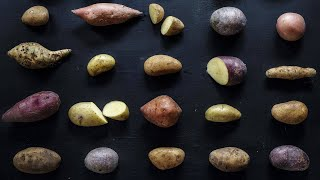 Download Which Type of Potato Is Best For Grilling, Mashing + Baking? Video