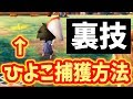 Download 【検証】キャンプ場にいる鳥を捕まえる裏ワザは存在するのか?【とびだせどうぶつの森】 Video