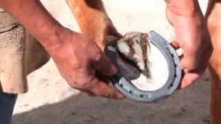 Download Como herrar un caballo Video