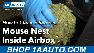 Download How to Clean and Remove Mouse Nest Inside Air Box Video