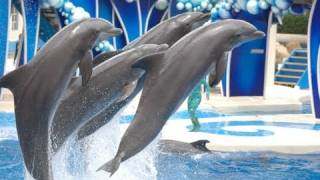 Download The Complete 2017 SeaWorld ″Blue Horizons″ Dolphin Show Video