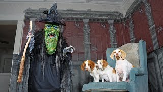 Download Dogs vs Giant Witch Prank: Funny Dogs Maymo, Penny & Potpie Video