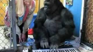 Download Koko plays an electronic keyboard Video