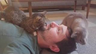 Download BUB and Josie the Cat Takeover Video