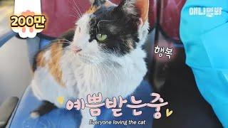 Download 537번 버스 기사 아저씨 바라기! =^・ω・^= 길냥이 양순이♥ Video