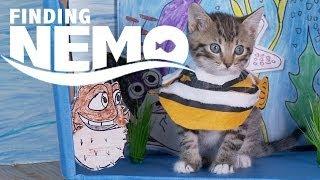 Download Disney Pixar's Finding Nemo (Cute Kitten Version) Video