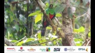 Download Feria Internacional de las Aves en Cali - Colombia Birdfair 2015 Video