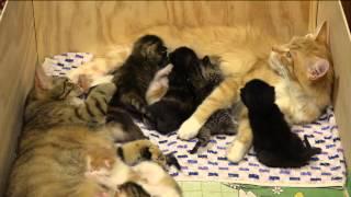 Download 14 Kitten!!! 2 Wochen alt. Video