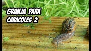 Download Como Hacer una Granja de Caracoles #2 | La Huerta de Ivan Video