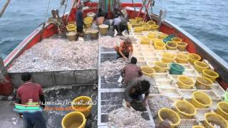 Download Thai Stop IUU Fishing Documentary Chapter 2 Video