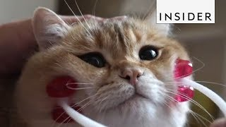 Download The Internet Can't Get Enough of These Pets Video