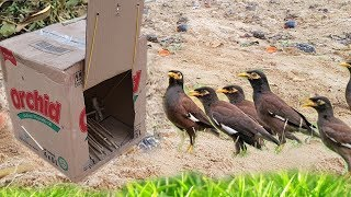Download Awesome Quick Bird Trap Using Box Paper Make By Smart Girl Work 100% Video