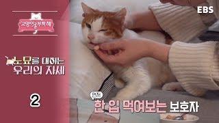 Download 고양이를 부탁해 - 노묘를 대하는 우리의 자세 #002 Video