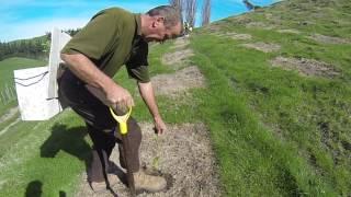 Download Planting eucalyptus seedlings - best practice planting Video