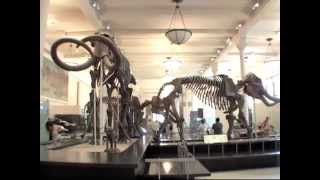 Download American Museum of Natural History in New York Dinosaur film (better resolution 2013) Video