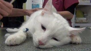 Download Dessine-moi un métier : Comment on devient Vétérinaire ? Video
