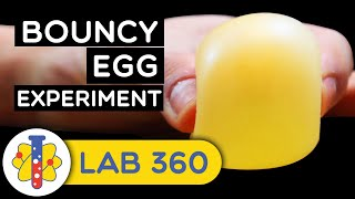 Download How To Make Bouncy Egg Video